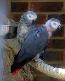 bubble and Squeak together in their aviary